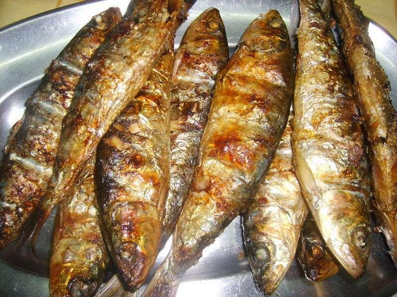 Resultado de imagem para sardinhas